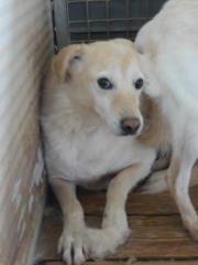 Hunde aus Italien suchen dringend Plätze!!! Ein ganzes Leben im Canile! - Seite 3 9650775dlq