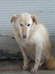 Hunde aus Italien suchen dringend Plätze!!! Ein ganzes Leben im Canile! - Seite 3 9650776kyk