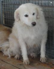 Hunde aus Italien suchen dringend Plätze!!! Ein ganzes Leben im Canile! - Seite 3 9650777egl