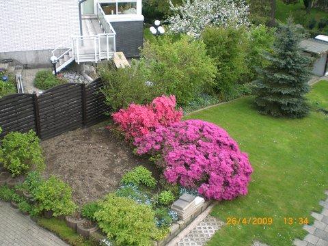 Beet neu gestalten 2 alte azaleen erhalten seite 1 for Blumenbeet neu gestalten pflanzen