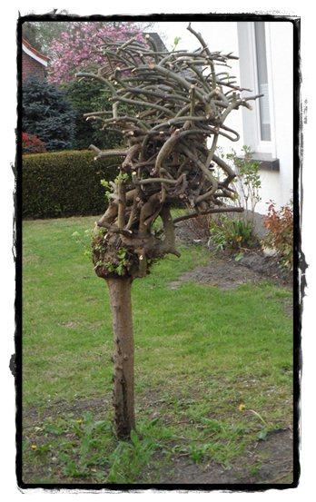 Außergewöhnlich Bepflanzung unter Hängeweide - Mein schöner Garten Forum &CL_39
