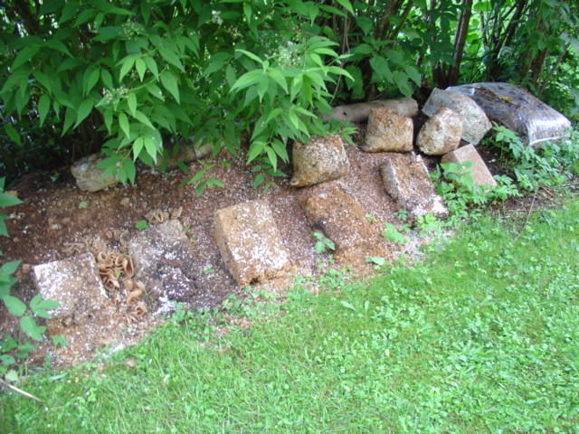 Außergewöhnlich kulturpilz.de • Thema anzeigen - Pilze in meinem Garten &XW_74