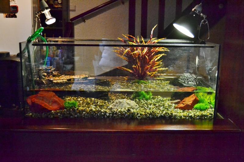 uv lampe für wasserschildkröten
