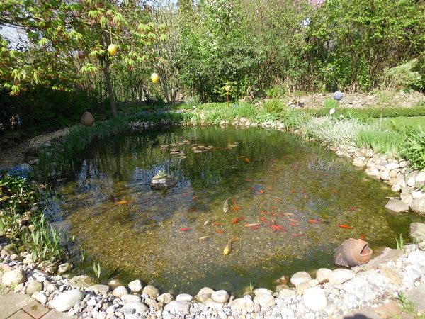 Prächtig Gartenteichneuanlage ohne diese Kapilarsperrrenwulst - Mein #RF_44