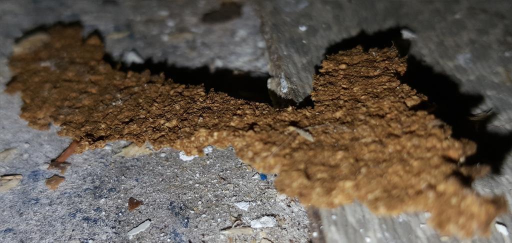 Hervorragend Asbest unterm PVC Küchenboden? Frag Mutti-Forum RA63