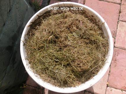Mikroorganismen im Garten – Rasenferment für´s Hochbeet