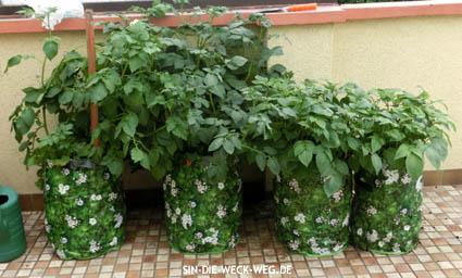 """Mein """"Kartoffel-Balkon"""" – oder Kartoffeln im Pflanzsack"""
