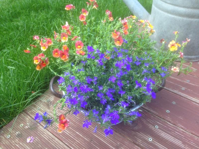 Etwas Neues genug Schnecken im Blumensieb/kasten - Mein schöner Garten Forum #SK_97