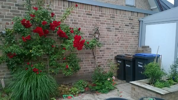 Berühmt Welche hohe Pflanze oder zweite Kletterrose? - Mein schöner Garten &QL_77