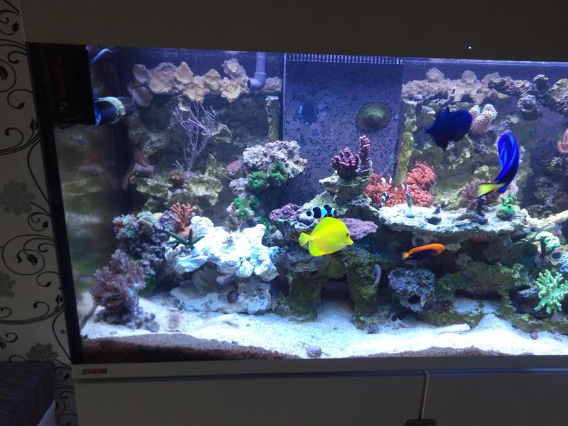 Extrem Neue Beleuchtung für eheim incpiria marine 400 - SANGOKAI HR48