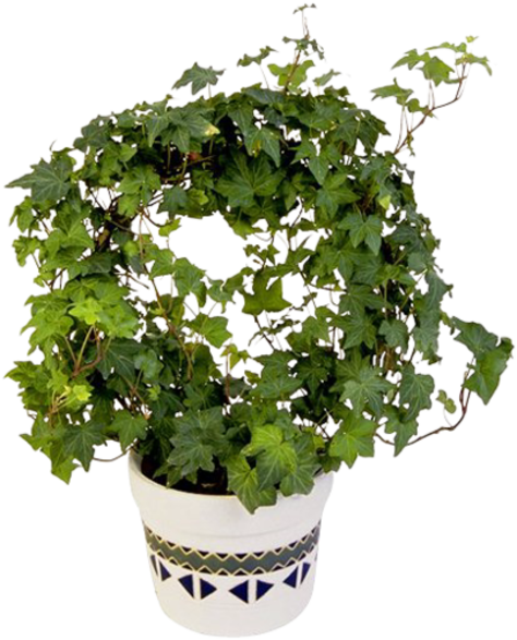 Ye il bitki resimleri green plant gr ne pflanzen png for Green pflanzen