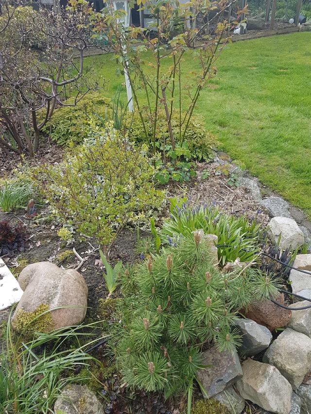 Minigeh lz in zinkwanne funktioniert das dauerhaft for Gartengestaltung zinkwanne