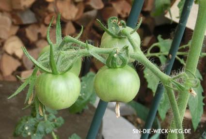 Tomaten 3.0