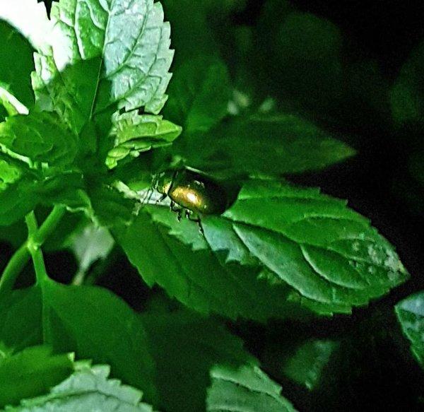 insekten und spinnen im garten oder anderswo page 16 mein sch ner garten forum. Black Bedroom Furniture Sets. Home Design Ideas