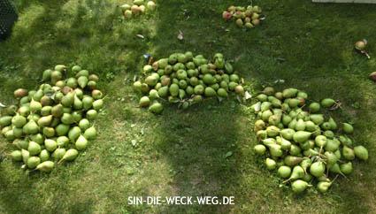 Birnenschwemme-Klappe I. – Birnenessig
