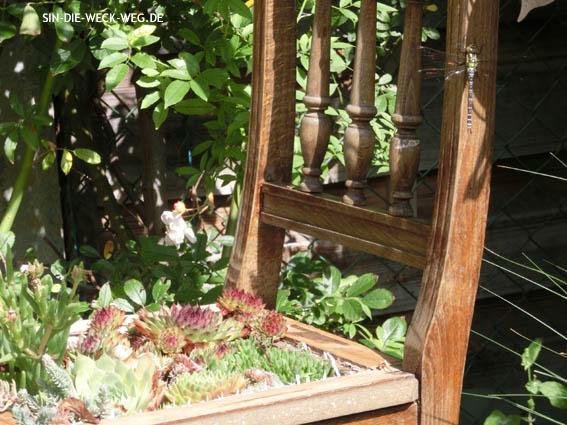 Tierischer Besuch: Edellibelle + Grasfrosch
