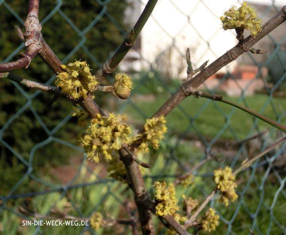 Frühling?! Erster Garteneinsatz...