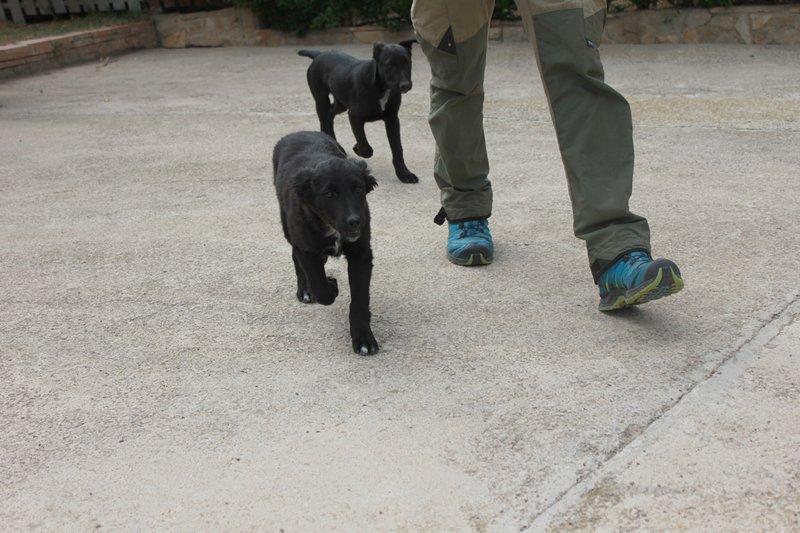Bildertagebuch - Niam, witziger Hundejunge auf der Suche nach seiner Familie - ZUHAUSE IN SPANIEN GEFUNDEN! 32450248uv