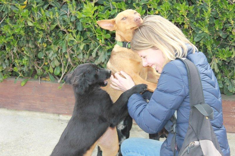 Bildertagebuch - Niam, witziger Hundejunge auf der Suche nach seiner Familie - ZUHAUSE IN SPANIEN GEFUNDEN! 32450252pj