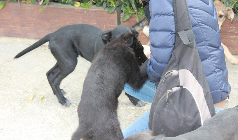 Bildertagebuch - Niam, witziger Hundejunge auf der Suche nach seiner Familie - ZUHAUSE IN SPANIEN GEFUNDEN! 32450253tn