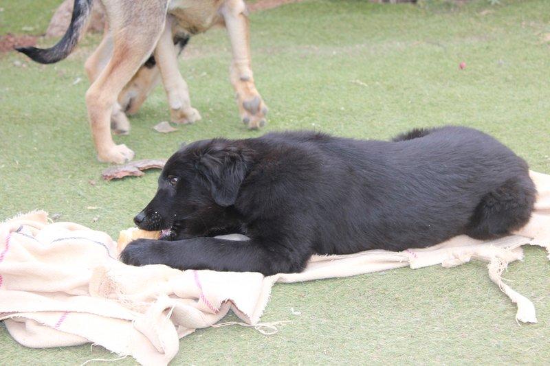 Bildertagebuch - Niam, witziger Hundejunge auf der Suche nach seiner Familie - ZUHAUSE IN SPANIEN GEFUNDEN! 32450259xv