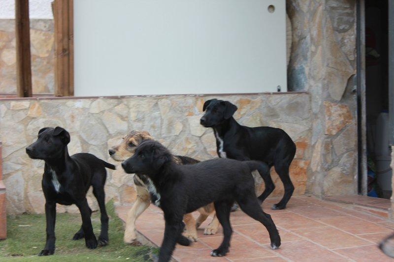 Bildertagebuch - Niam, witziger Hundejunge auf der Suche nach seiner Familie - ZUHAUSE IN SPANIEN GEFUNDEN! 32450260mx