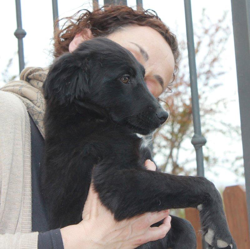 Bildertagebuch - Niam, witziger Hundejunge auf der Suche nach seiner Familie - ZUHAUSE IN SPANIEN GEFUNDEN! 32450261zi