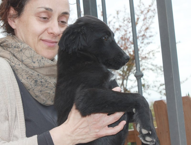 Bildertagebuch - Niam, witziger Hundejunge auf der Suche nach seiner Familie - ZUHAUSE IN SPANIEN GEFUNDEN! 32450262qd