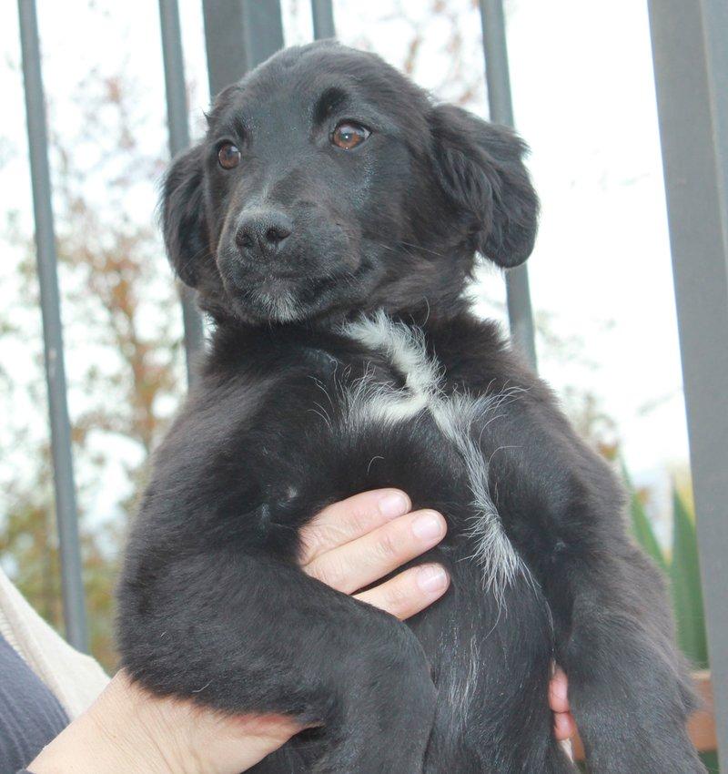 Bildertagebuch - Niam, witziger Hundejunge auf der Suche nach seiner Familie - ZUHAUSE IN SPANIEN GEFUNDEN! 32450263rr