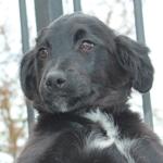 Bildertagebuch - Niam, witziger Hundejunge auf der Suche nach seiner Familie - ZUHAUSE IN SPANIEN GEFUNDEN! 32450264ry