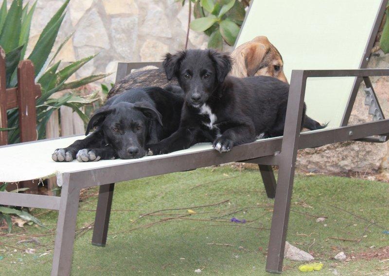Bildertagebuch - Niam, witziger Hundejunge auf der Suche nach seiner Familie - ZUHAUSE IN SPANIEN GEFUNDEN! 32450265gq