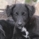 Bildertagebuch - Niam, witziger Hundejunge auf der Suche nach seiner Familie - ZUHAUSE IN SPANIEN GEFUNDEN! 32450266qf