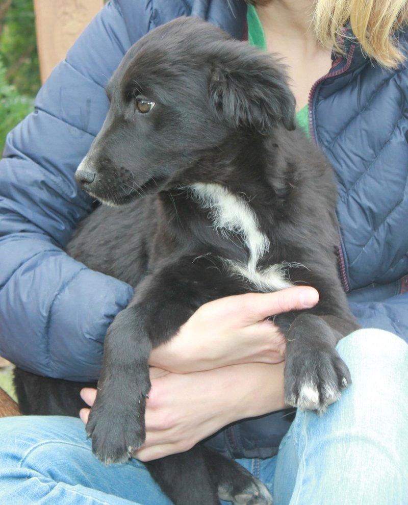 Bildertagebuch - Niam, witziger Hundejunge auf der Suche nach seiner Familie - ZUHAUSE IN SPANIEN GEFUNDEN! 32450267tx