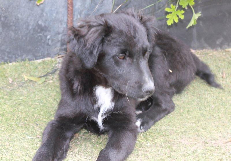 Bildertagebuch - Niam, witziger Hundejunge auf der Suche nach seiner Familie - ZUHAUSE IN SPANIEN GEFUNDEN! 32450268lj