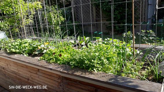 Garten im Mai 2018 ...
