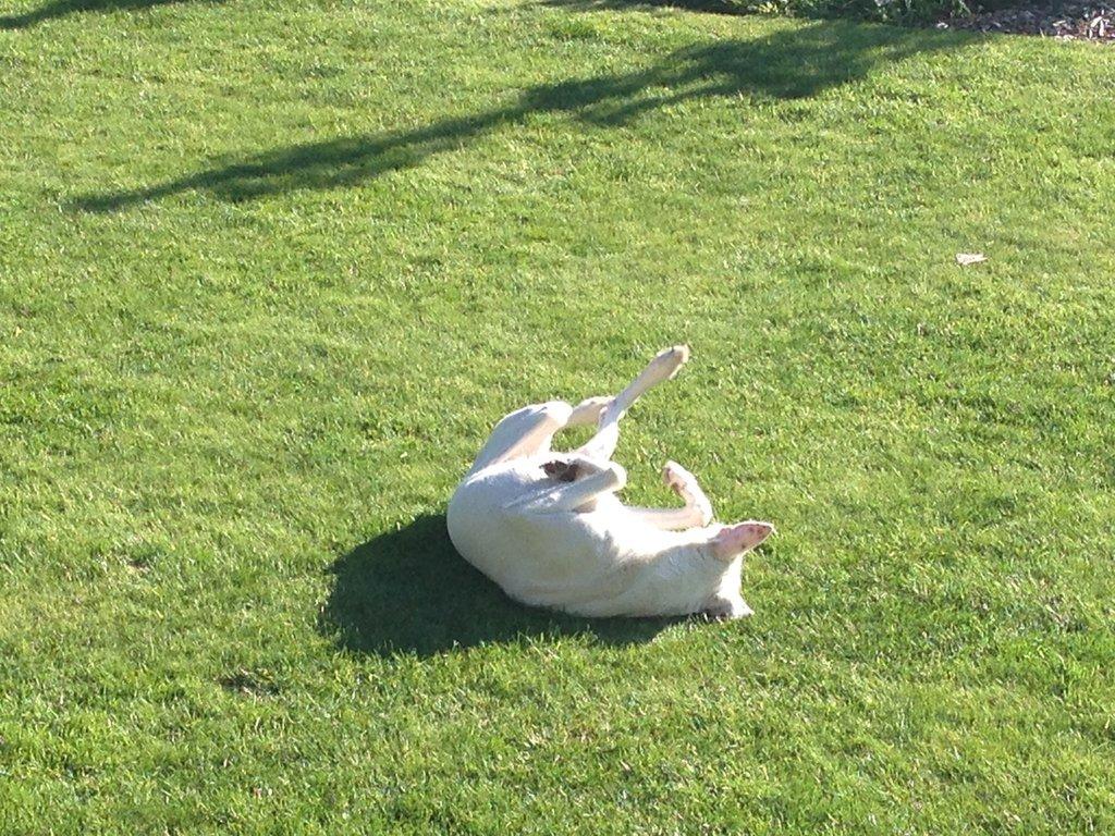 Bildertagebuch -  ENYA hat ihren Sonnenplatz gefunden, aber wir suchen PATEN für die Maus. 32815871uh