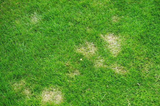Beliebt Bevorzugt Rasenprobleme - überall gelbe Flecken - Mein schöner Garten Forum @DJ_55