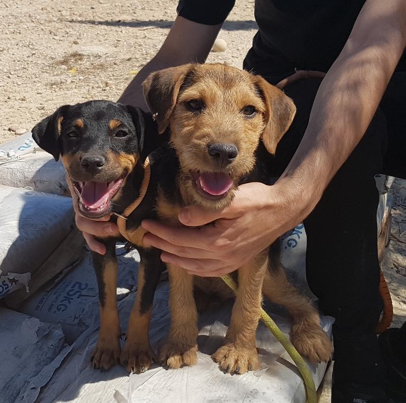 Bildertagebuch - Dale:  kleiner, fröhlicher Welsh? Terrier-Mix-Teenie sucht Familie mit Herz und Unternehmungsgeist - VERMITTELT! 33143217kl