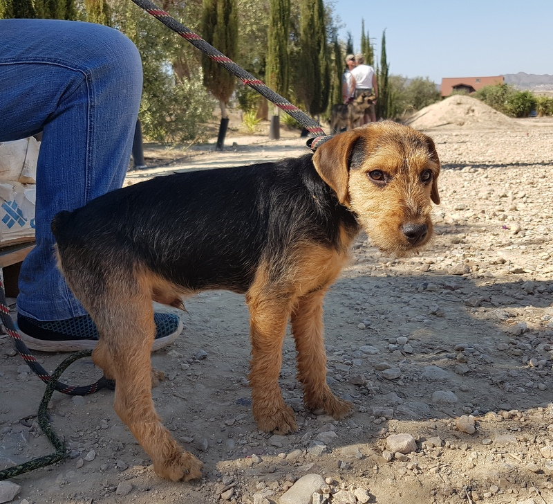 Bildertagebuch - Dale:  kleiner, fröhlicher Welsh? Terrier-Mix-Teenie sucht Familie mit Herz und Unternehmungsgeist - VERMITTELT! 33143222hj
