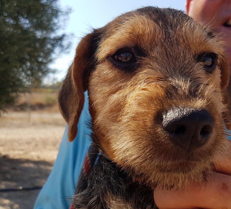 Bildertagebuch - Dale:  kleiner, fröhlicher Welsh? Terrier-Mix-Teenie sucht Familie mit Herz und Unternehmungsgeist - VERMITTELT! 33143223py