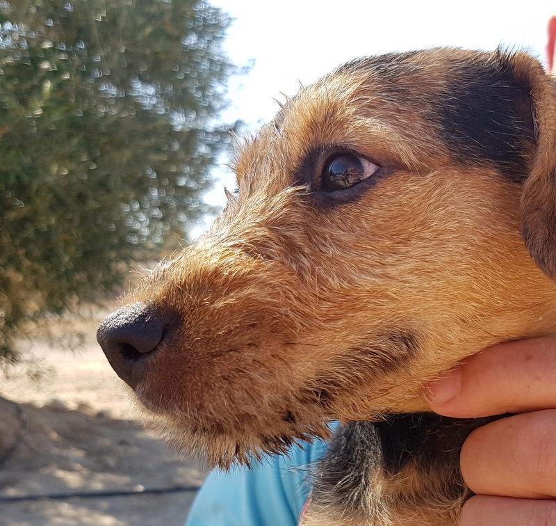 Bildertagebuch - Dale:  kleiner, fröhlicher Welsh? Terrier-Mix-Teenie sucht Familie mit Herz und Unternehmungsgeist - VERMITTELT! 33143224sg