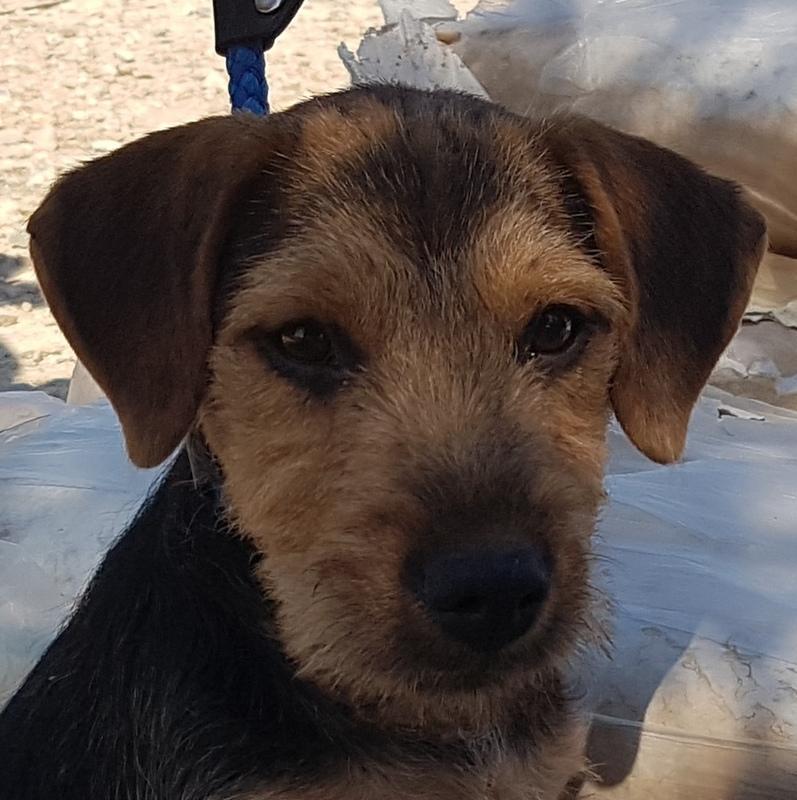 Bildertagebuch - Dale:  kleiner, fröhlicher Welsh? Terrier-Mix-Teenie sucht Familie mit Herz und Unternehmungsgeist - VERMITTELT! 33143233hs