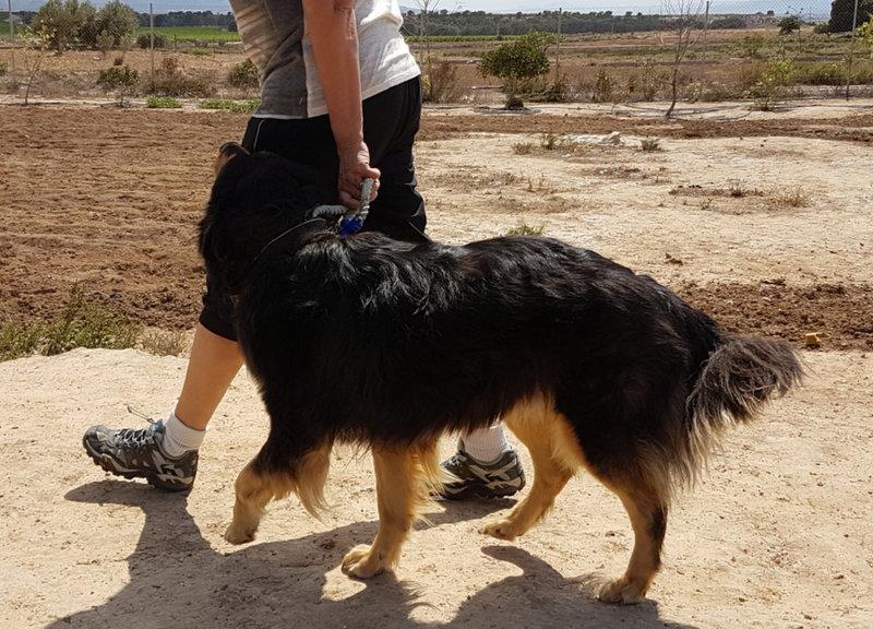 Bildertagebuch  - Ben: ein echter Hundekumpel - VERMITTELT - 33157668go