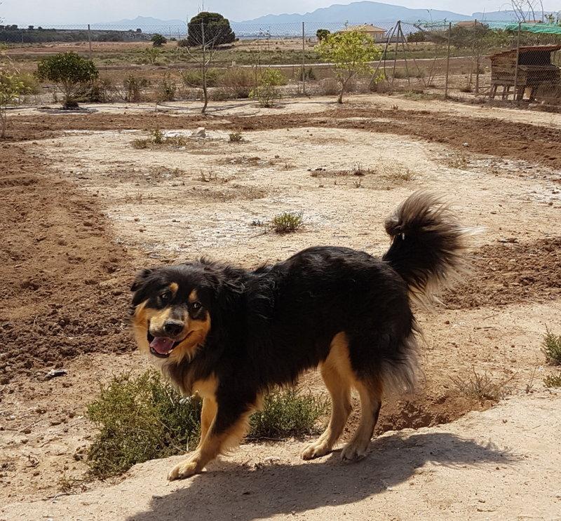 Bildertagebuch  - Ben: ein echter Hundekumpel - VERMITTELT - 33157679ln