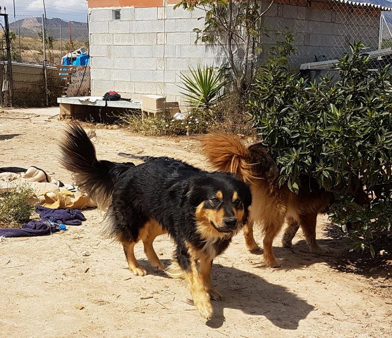 Bildertagebuch  - Ben: ein echter Hundekumpel - VERMITTELT - 33157681sr
