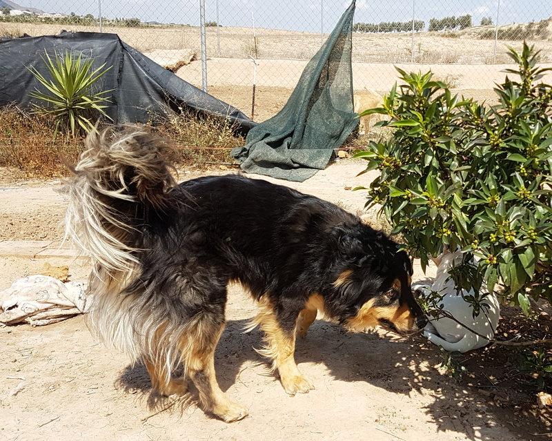 Bildertagebuch  - Ben: ein echter Hundekumpel - VERMITTELT - 33157684ed