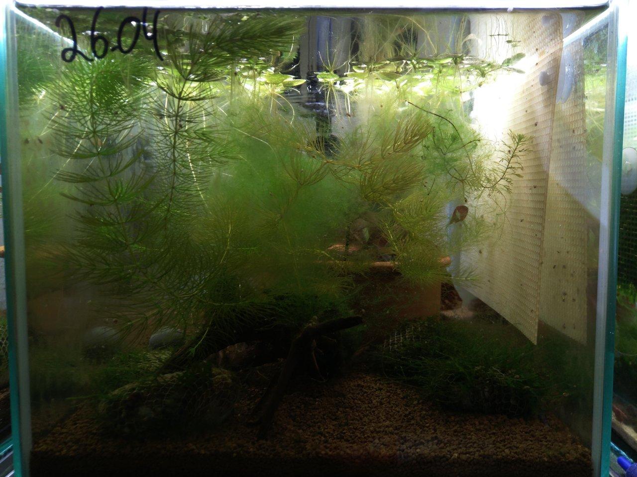 pflanzen d ngen oder nicht d ngen das ist hier die frage seite 4 aquarium forum. Black Bedroom Furniture Sets. Home Design Ideas