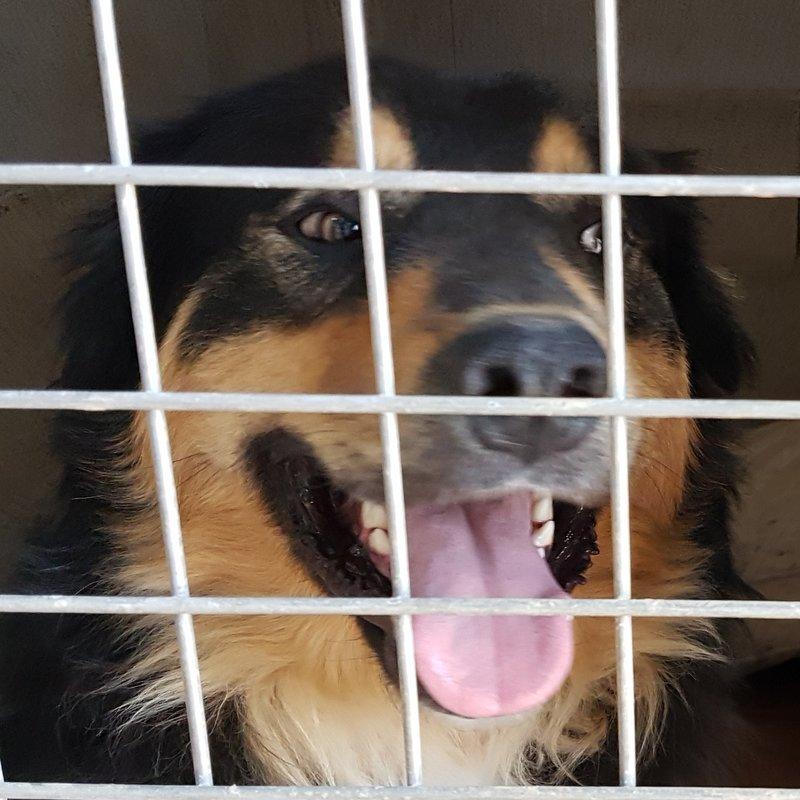 Bildertagebuch  - Ben: ein echter Hundekumpel - VERMITTELT - 33157691pz