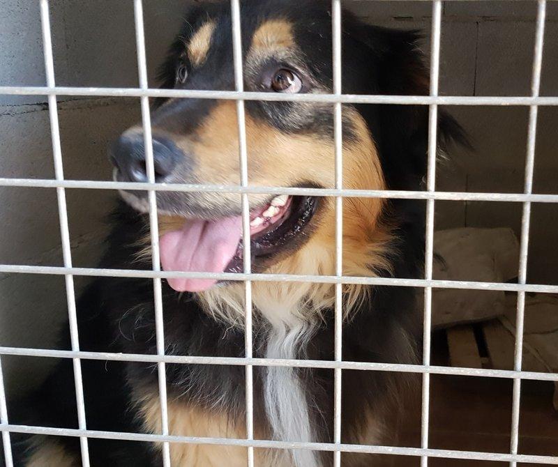 Bildertagebuch  - Ben: ein echter Hundekumpel - VERMITTELT - 33157692si
