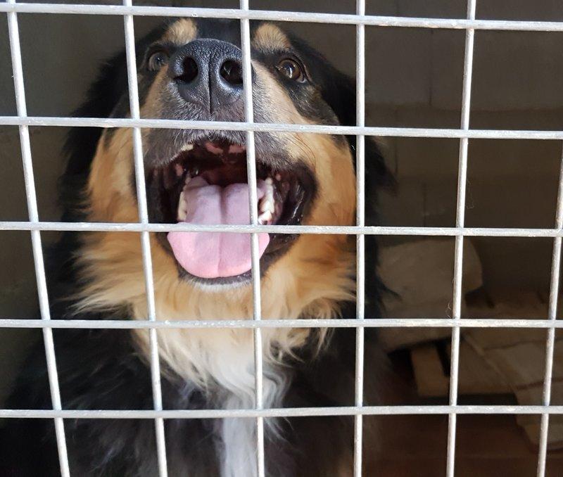Bildertagebuch  - Ben: ein echter Hundekumpel - VERMITTELT - 33157693nx